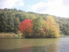 Cetenský rybník